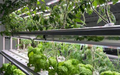Nýtt hydroponics gróðurhús